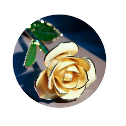 24kt Gold Yellow Rose From Black Tie Valet of Beverly Hills, CA